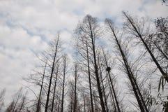 Árvore sobre o céu azul Fotos de Stock Royalty Free