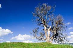 Árvore sobre o céu azul imagens de stock