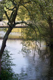 Árvore sobre o rio Imagem de Stock