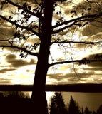 Árvore sobre o sol Fotos de Stock Royalty Free