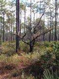 A árvore solitária fotos de stock