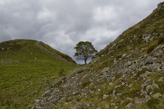 Árvore solitária. Fotos de Stock