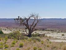 Árvore solitária fotos de stock