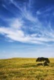 A árvore solitária Imagem de Stock