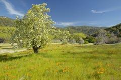Árvore solitária Fotos de Stock Royalty Free