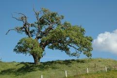 Árvore solitária foto de stock royalty free