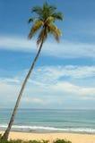 Árvore solitária Foto de Stock