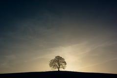 Árvore solitária fotografia de stock