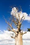 Árvore solitária Fotografia de Stock Royalty Free