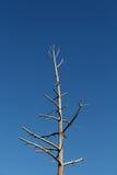 Árvore solitária Imagem de Stock Royalty Free