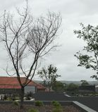 A árvore solitária Imagens de Stock