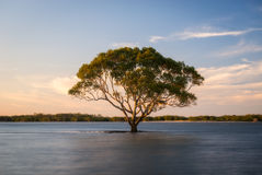 Árvore solitária Imagem de Stock