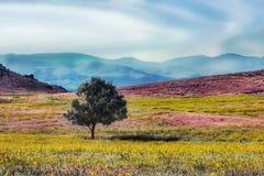 Árvore solitária com Smokey Background Fotografia de Stock Royalty Free