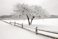 Árvore solitária da neve fotografia de stock