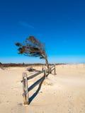 Árvore solitária da praia Fotografia de Stock