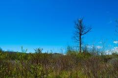 Árvore solitária de encontro ao céu azul Imagem de Stock Royalty Free