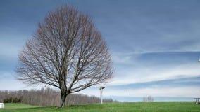 Árvore solitária de Timelapse com o céu azul nebuloso filme