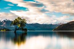 A árvore solitária de Wanaka Fotografia de Stock Royalty Free
