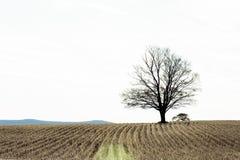 Árvore solitária em Autumn Farm imagem de stock