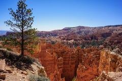 Árvore solitária em Cliff Edge a Bryce Canyon Fotos de Stock