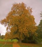 Árvore solitária em cores do outono fotografia de stock royalty free