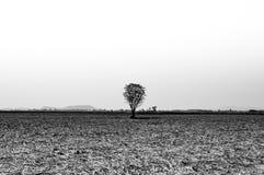 Árvore solitária em preto e branco Foto de Stock