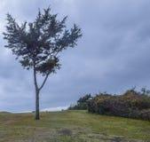 Árvore solitária em um dia nebuloso Fotografia de Stock