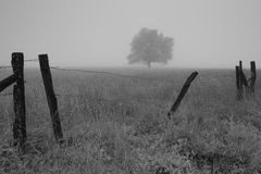 Árvore solitária em um prado Imagens de Stock Royalty Free