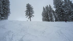 Árvore solitária em uma fuga Fotografia de Stock