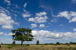 Árvore solitária em uma grande pastagem fotografia de stock royalty free