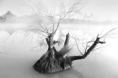Árvore solitária em uma manhã nevoenta na lagoa de Pugh Fotografia de Stock