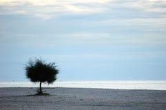 Árvore solitária em uma praia Imagens de Stock Royalty Free