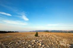 Árvore solitária entre rochas espalhadas no cume na garganta perdida acima da água da luz do amanhecer nas montanhas de Pryor em  Fotos de Stock Royalty Free