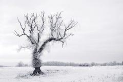 Árvore solitária na geada do hoar Fotografia de Stock