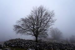 Árvore solitária na manhã Fotografia de Stock