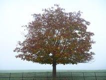 Árvore solitária na névoa no campo Fotografia de Stock