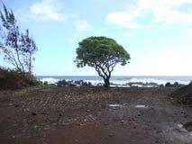 Árvore solitária na praia Imagem de Stock Royalty Free