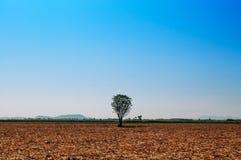 Árvore solitária na terra seca vazia com o céu claro do verão Fotografia de Stock Royalty Free