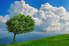 Árvore solitária nas montanhas Fotografia de Stock Royalty Free