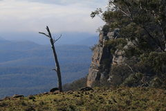 Árvore solitária nas montanhas azuis Foto de Stock