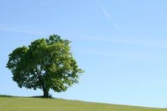 Árvore solitária no campo Fotografia de Stock Royalty Free