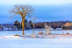 Árvore solitária no campo Foto de Stock Royalty Free