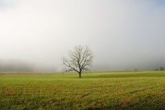 Árvore solitária no campo nevoento Imagem de Stock Royalty Free