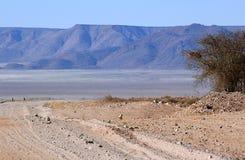 Árvore solitária no deserto áspero fotos de stock royalty free
