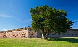 Árvore solitária no forte Pulaski Fotografia de Stock Royalty Free