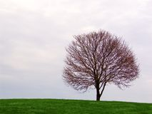 árvore solitária no horizonte imagem de stock