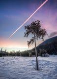 Árvore solitária no inverno no nascer do sol fotos de stock royalty free