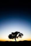 Árvore solitária no nascer do sol do por do sol Fotografia de Stock Royalty Free