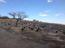 Árvore solitária no parque nacional de Matobo, Zimbabwe Fotografia de Stock
