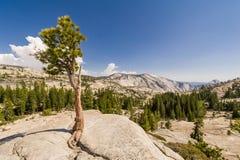 Árvore solitária no ponto de Olmsted Fotografia de Stock Royalty Free